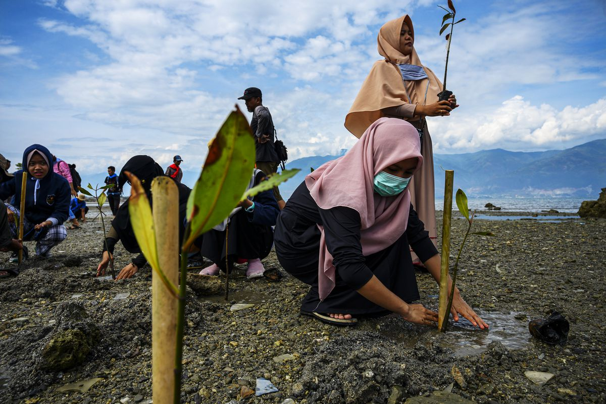 Activists and mangrove lovers plant mangrove seedlings in October 2019 on Palu Bay, Central Sulawesi, a coastal area in Indonesia that was damaged by a tsunami in 2018.