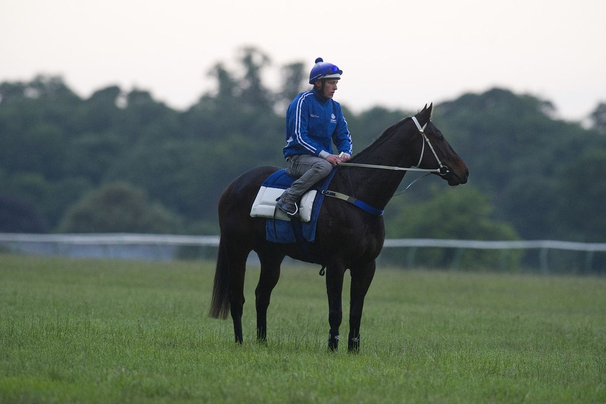 NEWMARKET, ENGLAND: Black Caviar ridden by Paddy Bell on the Al Bahathri gallops prior to the Royal Ascot race meeting on June 14, 2012 in Newmarket, England. (Photo by Alan Crowhurst/Getty Images)