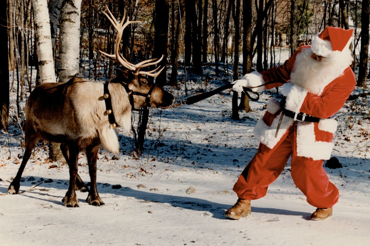Blitzen won't budge till Dec. 24. 'Twas the week before Christmas; and all through the Metro zoo; mo