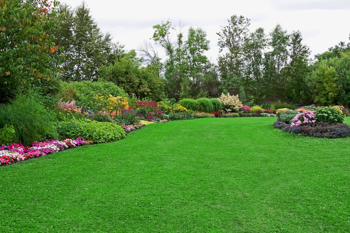 Lush lawn with flowers.