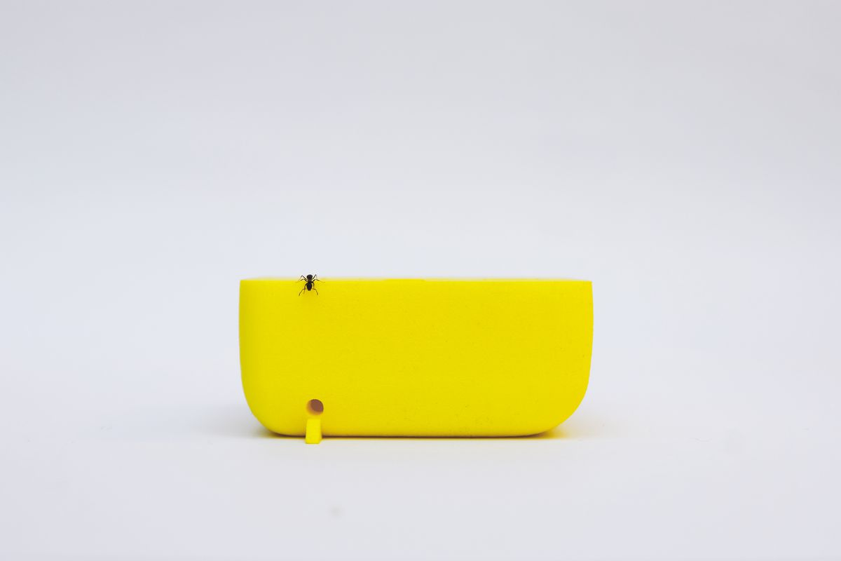 Ant on bright yellow object