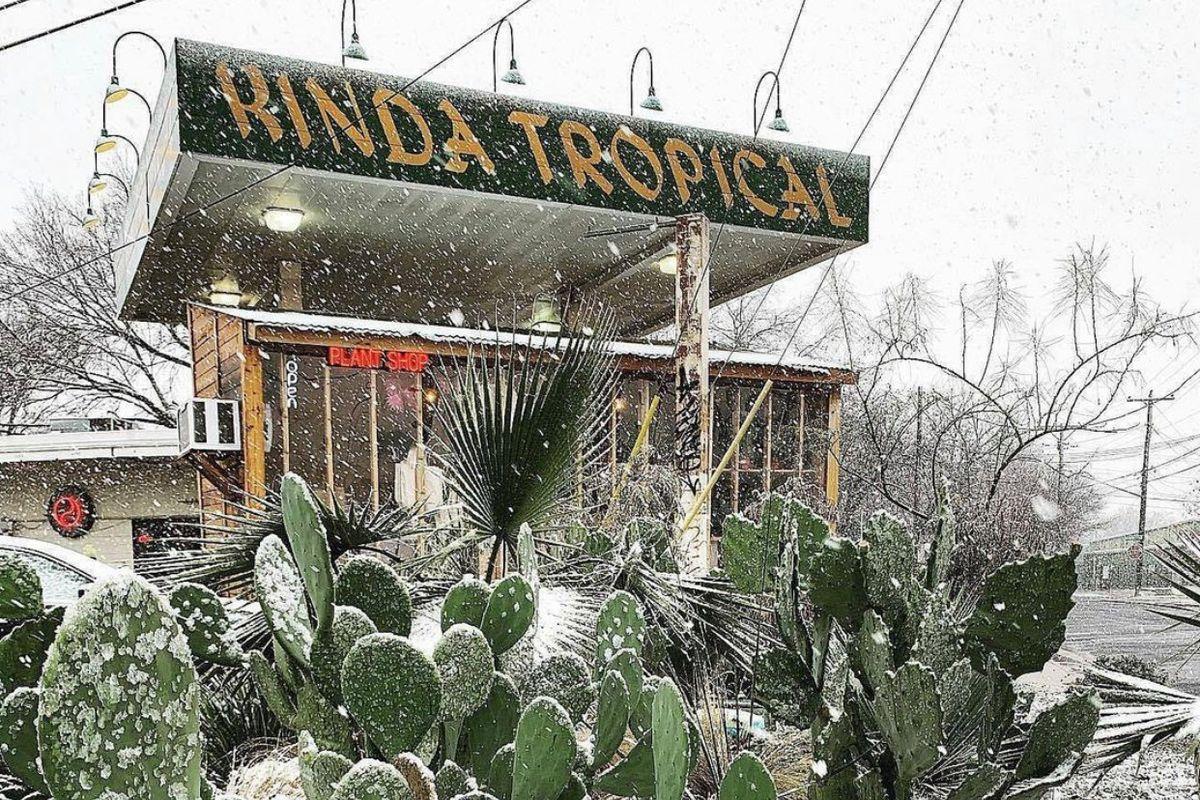 Kinda Tropical in the snow