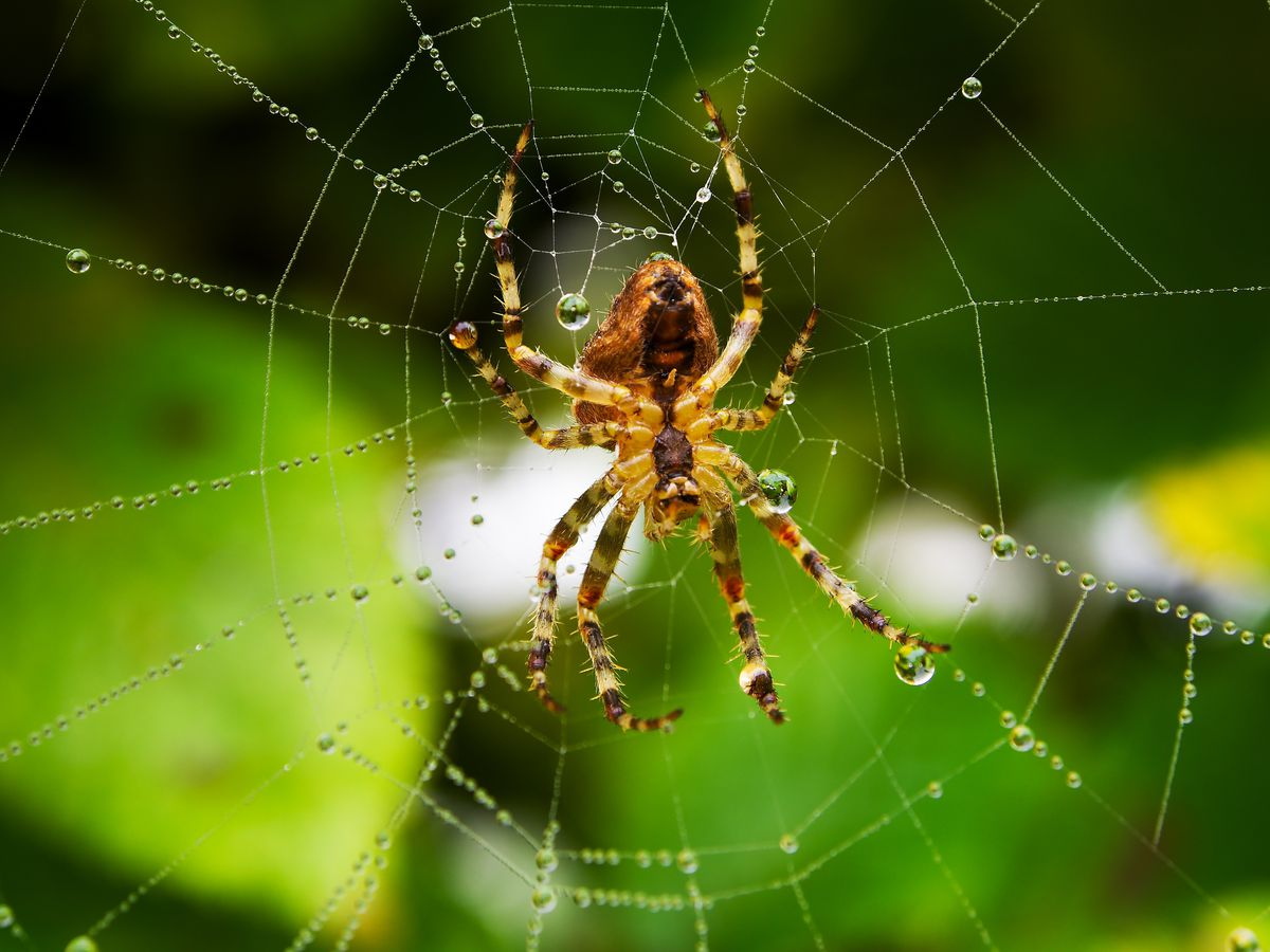 the verge review of animals spiders the verge