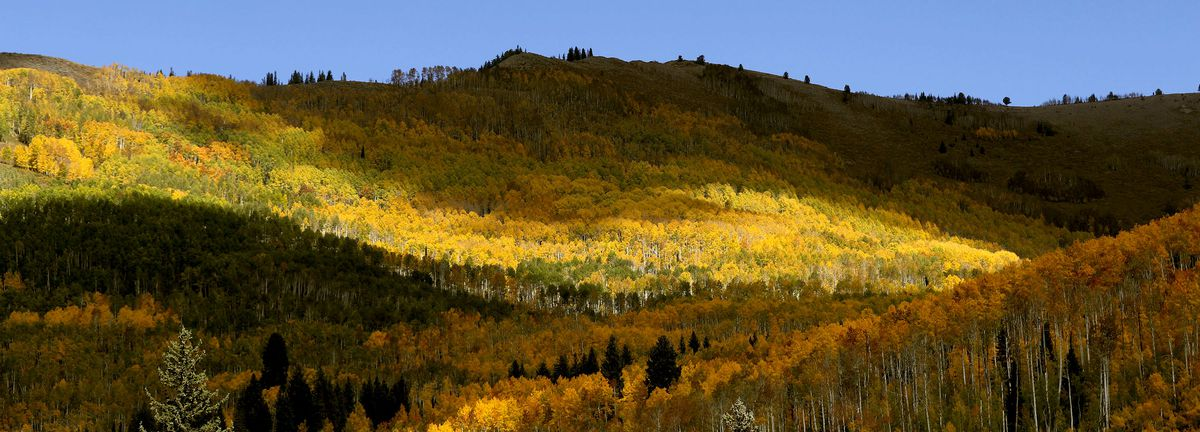 Fall colors are photographed in Big Cottonwood Canyon on Friday, Oct. 1, 2021.