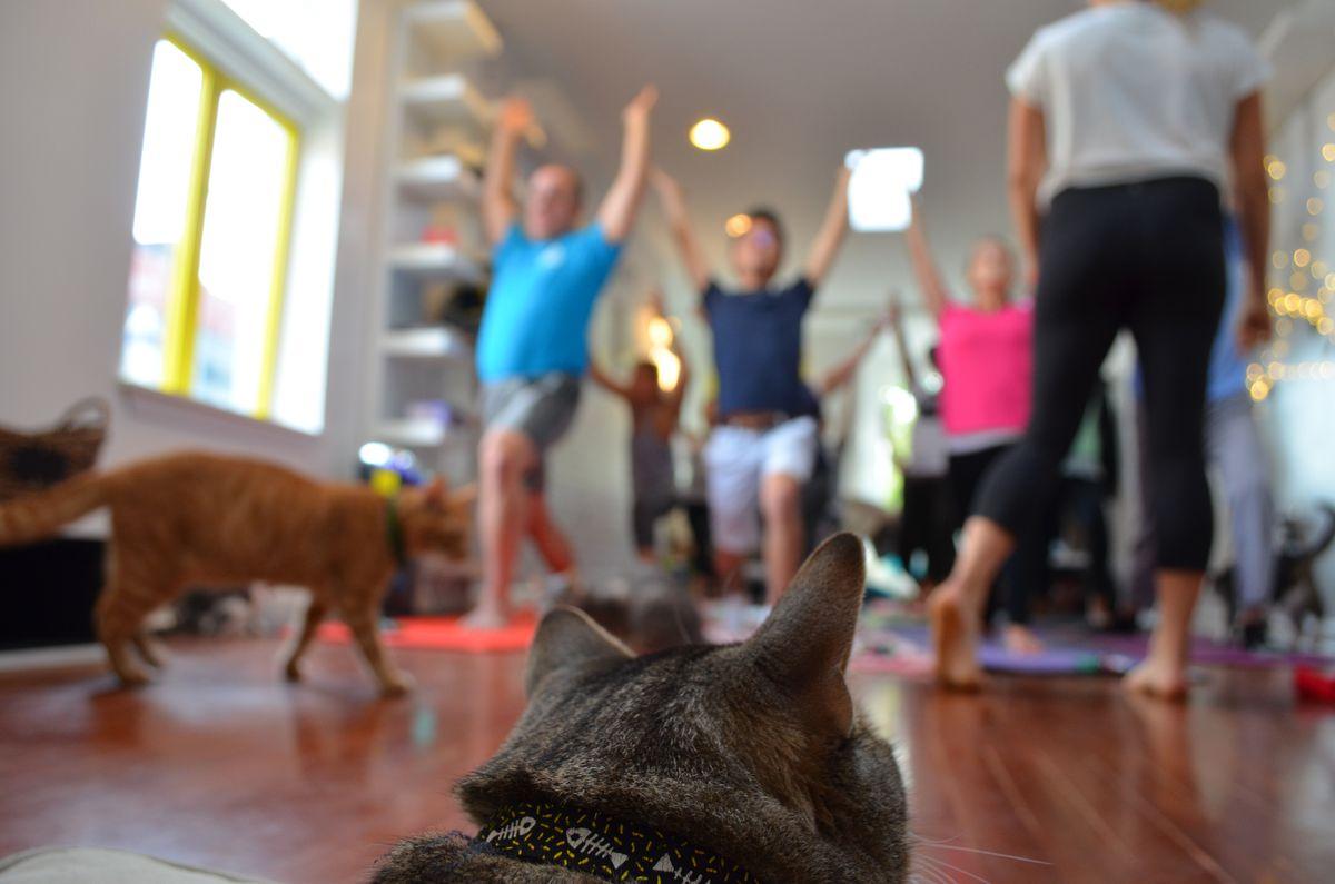A cat observes a yoga class.