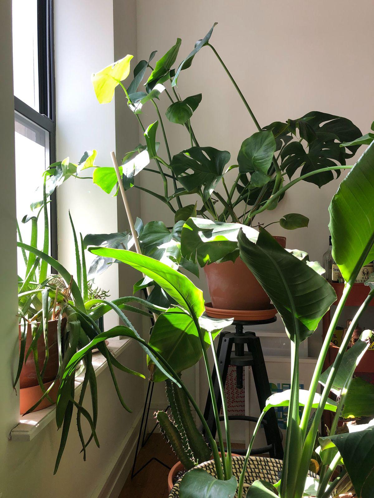 Plants near a window.