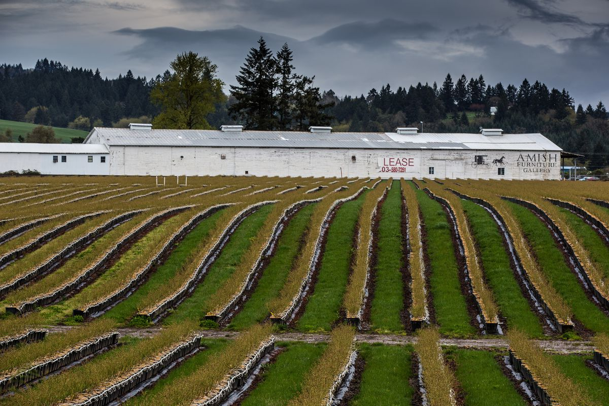Heavy Spring Rains Drench Oregon Wine Country