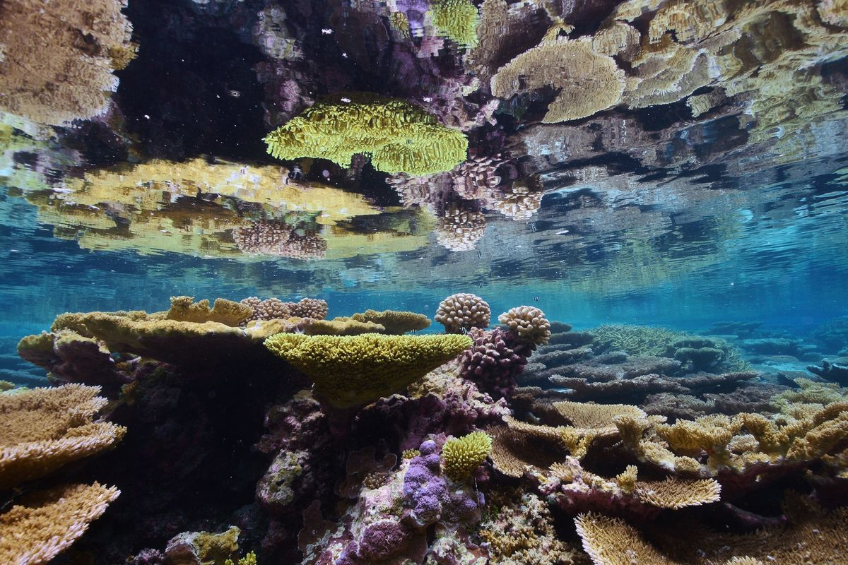Corals at Palmyra Atoll, one of the areas included in the new reserve.