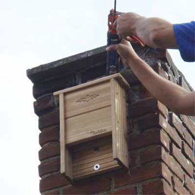 Person Installs Bat House On Chimney