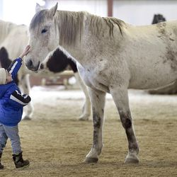 Mason LaDouceur, 5, of Adams, Mass., greets Zephyr during a Berkshire HorseWorks open house on Saturday, March 18, 2017, at Berkshire Equestrian Center in Richmond, Mass.