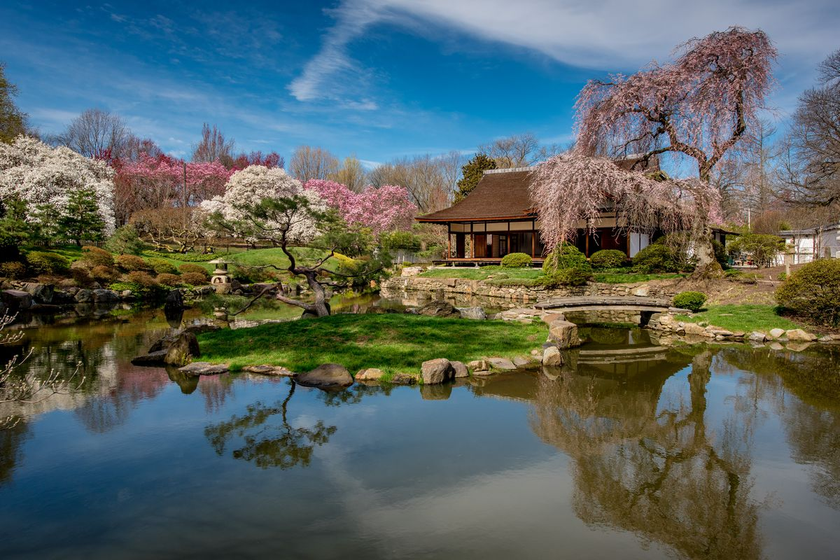 A view over a lake looking toward the Shofuso Japanese House and Garden during cherry blossom season.