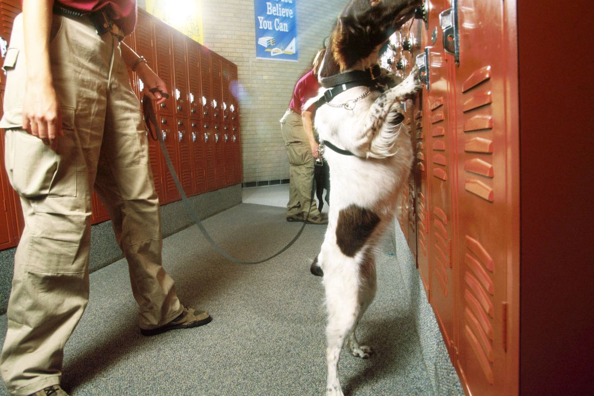 A dog sniffs a locker during training at a school in 1996 in Houston, TX. Interquest Group trains drug-sniffing dogs.