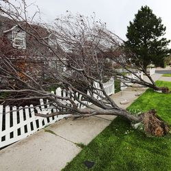 Trees felled by high winds lay on a small fence in Centerville on Tuesday, Sept. 8, 2020.