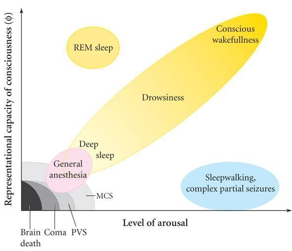 Consciousness chart
