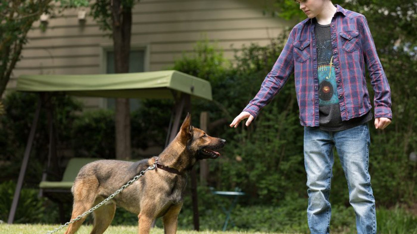 Max Is American Sniper Reimagined As A Terrible Dog Movie Vox