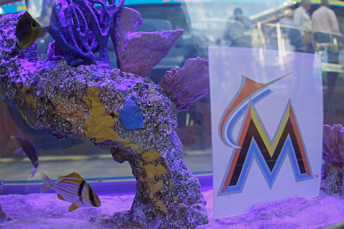 The fish have decided to sell.  (Photo by Mike Ehrmann/Getty Images)