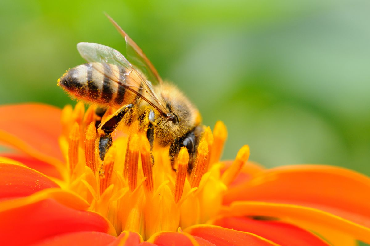 In our State of Utah, the honey bee is an insect of great importance economically, agriculturally and symbolically.