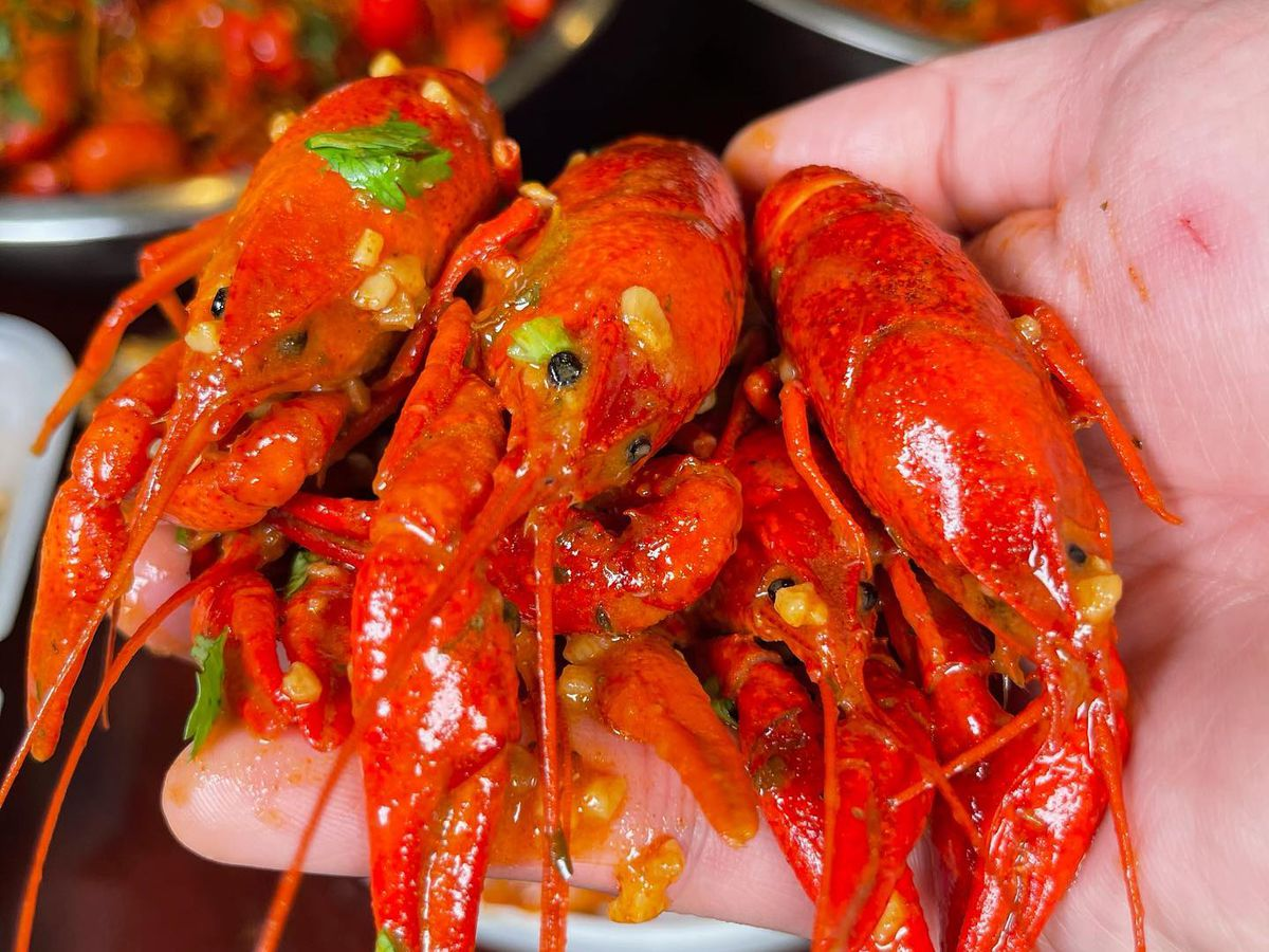 A hand holding three whole crawfish drenched in sauce