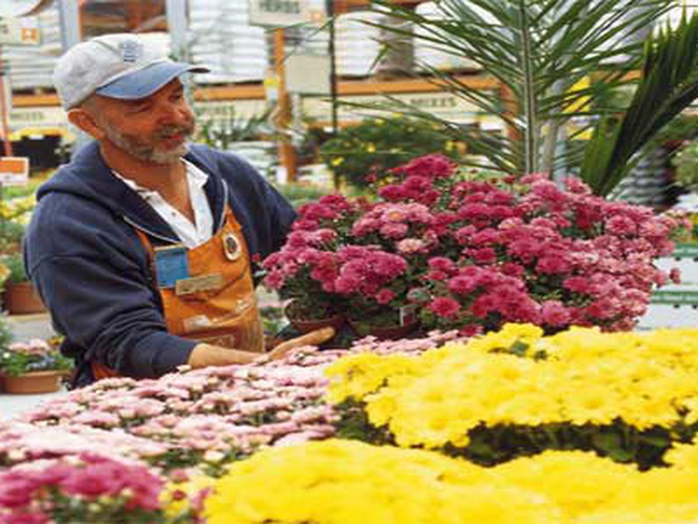 Get The Best Deal On Plants This Old House