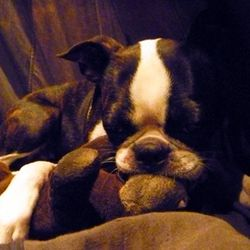 Monkey with her favorite toy, which is, of course, a monkey