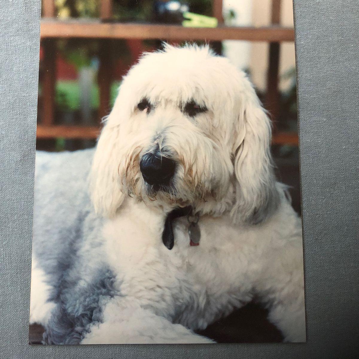 Mr. Digby, Mr. Digby's dog