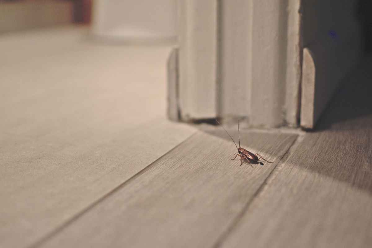 How To Get Rid Of Roaches This Old House