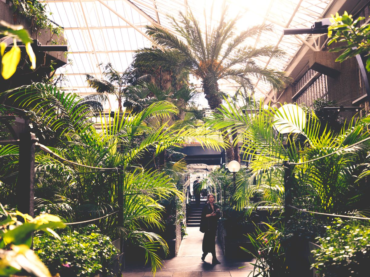 The interior of the Barbican Conservatory in London. There are many lush plants and trees and a path that people are walking on.