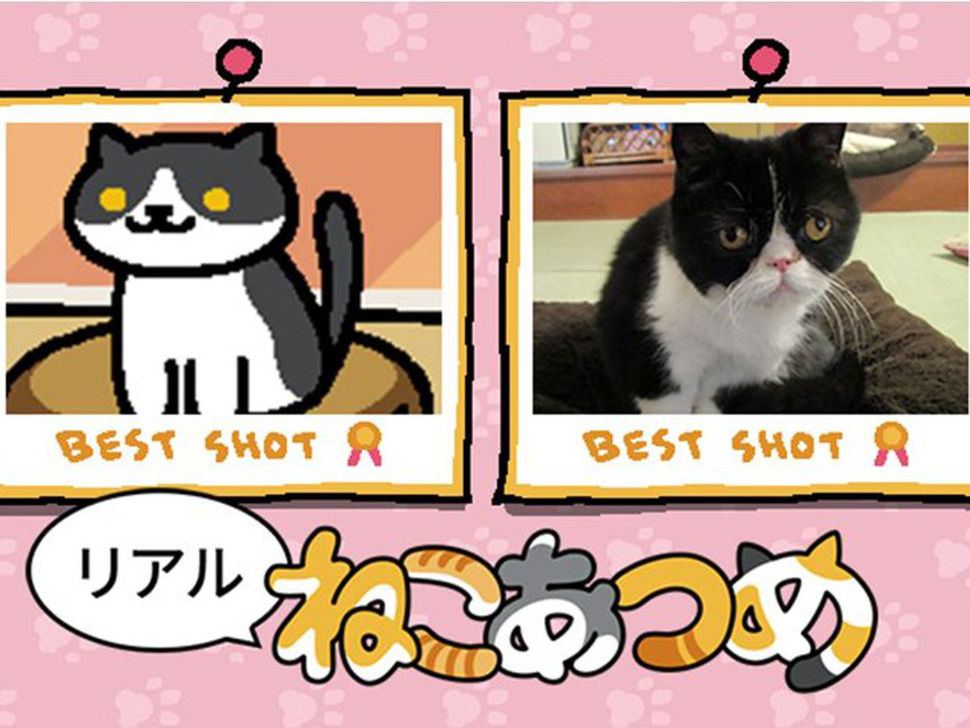 Watch A Real Life Youtube Version Of Cult Cat App Neko Atsume