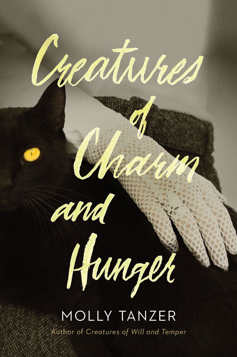 creatures of charm and hunger cover: a hand pets a cat