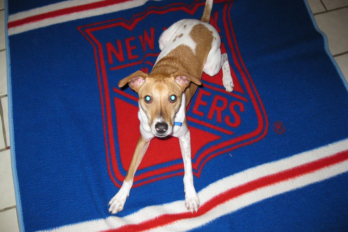 Ranger the Dog wants to know what the Rangers will do with Wade Redden