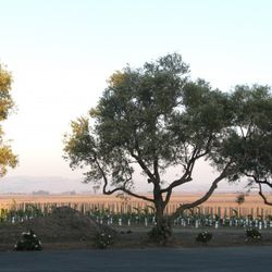 View to the vineyards