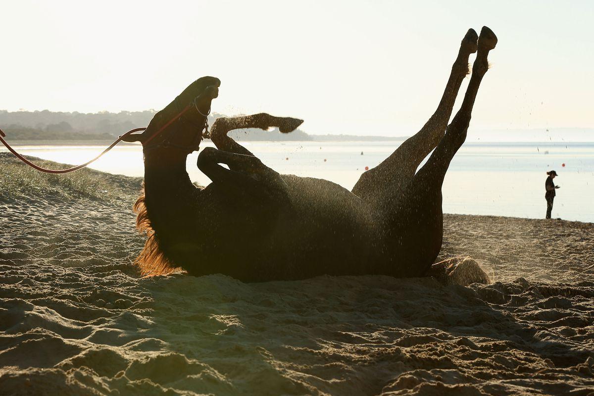 Horse Training On Balnarring Beach