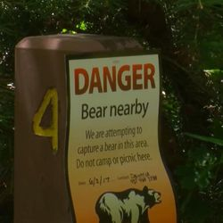 Danger signs are posted in several campsites in Sanpete County's Maple Canyon on Monday, June 12, 2017, after a bear was sighted in the area. Wildlife managers remind campers to keep their site clean and to put food away so bears can reach it.