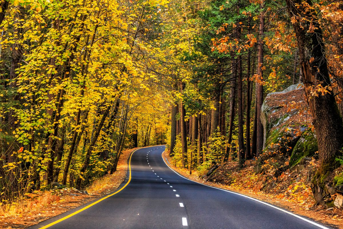 A road with trees that have colorful leaves on both side in the autumn in Yosemite National Park.