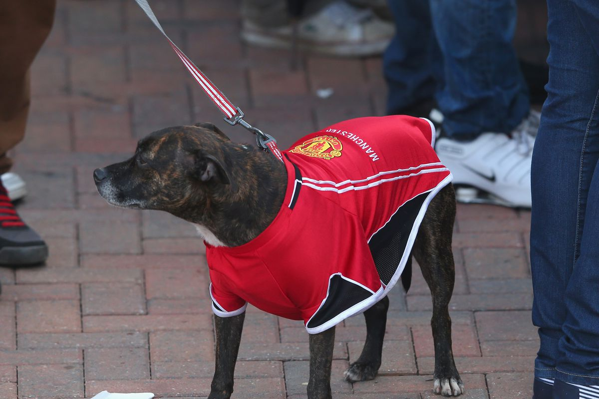 Tbb Roundtable Staff Pets Give Their Opinions On Manchester United The Busby Babe