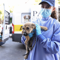 A dog is carried into PAWS Chicago Medical Center after arriving Wednesday afternoon from shelters in Louisiana in the path of Hurricane Ida.