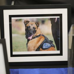 Photos are displayed during memorial services for Herriman police K-9 Hondo at Herriman High School in Herriman on Saturday, Feb. 29, 2020. The 7-year-old Belgian Malinois was shot and killed in the line of duty on Feb. 13 while trying to apprehend a wanted violent fugitive who was also shot and killed after officers say he displayed a gun.
