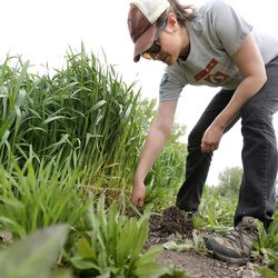 Susan Finlayson, program director for Wasatch Community Gardens, works at the Rose Park Community Garden in Salt Lake City on Monday, April 17, 2017.
