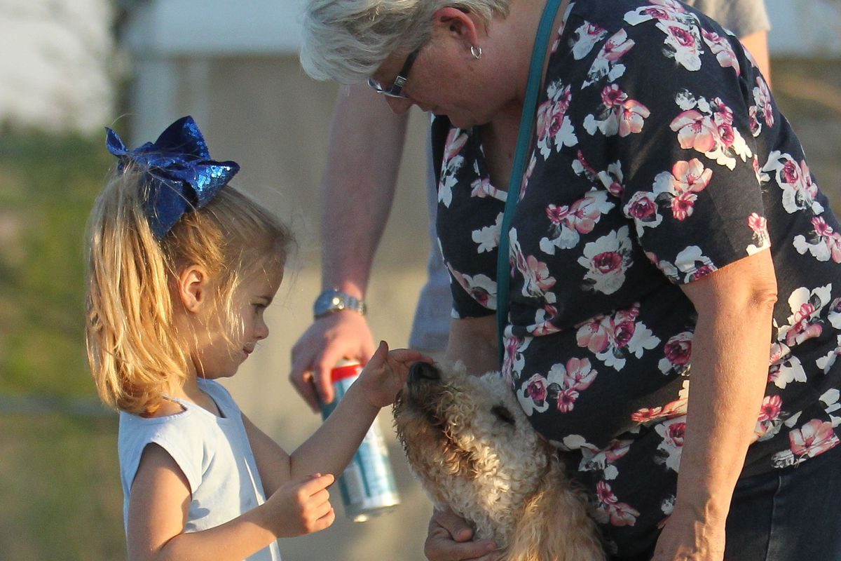 On a sidewalk next to some grass, a Golden doodle with a fancy hankerchief sits between a woman's feet while a young girl tenderly pets the dog's nose.