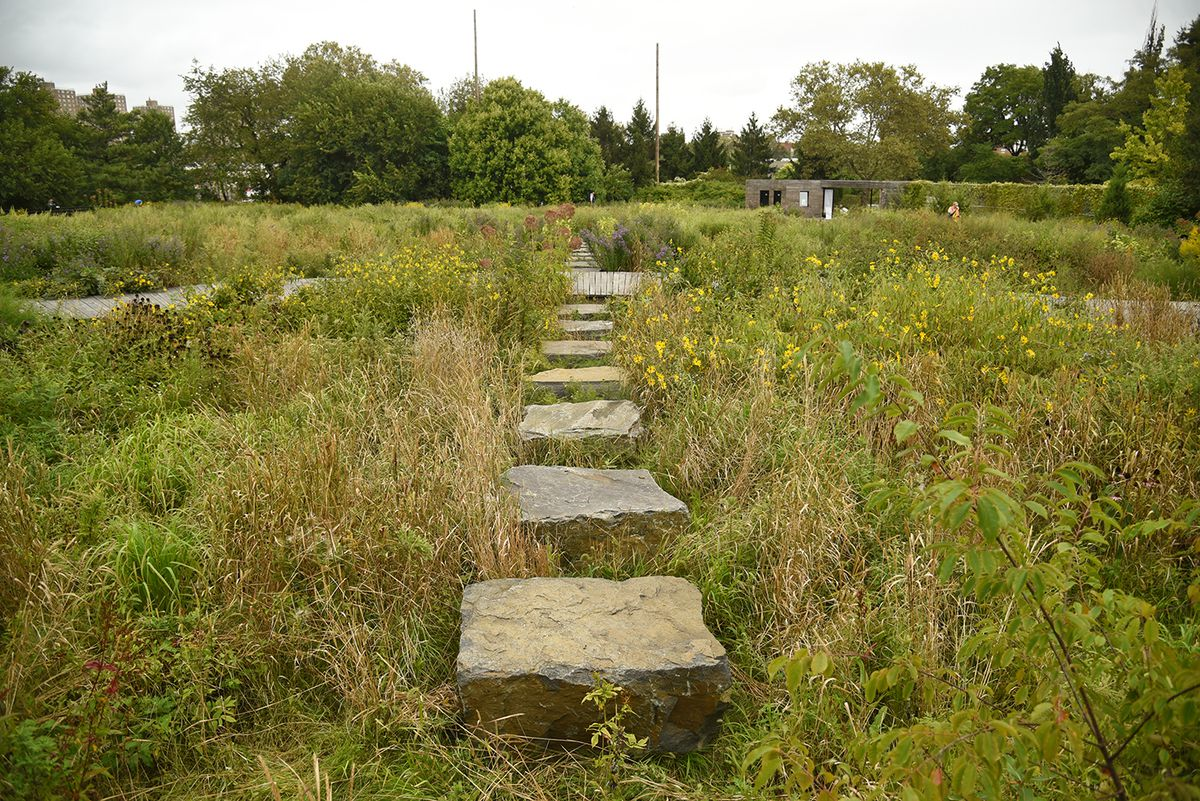 A field with tall grass and a pathway made up of several stones.
