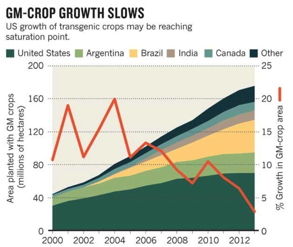GM crop growth