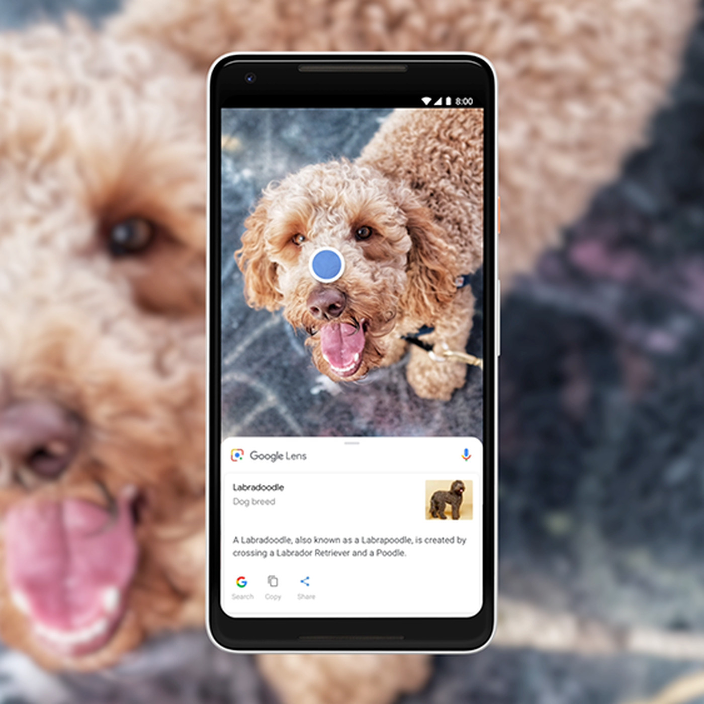 How to use Google Lens - The Verge
