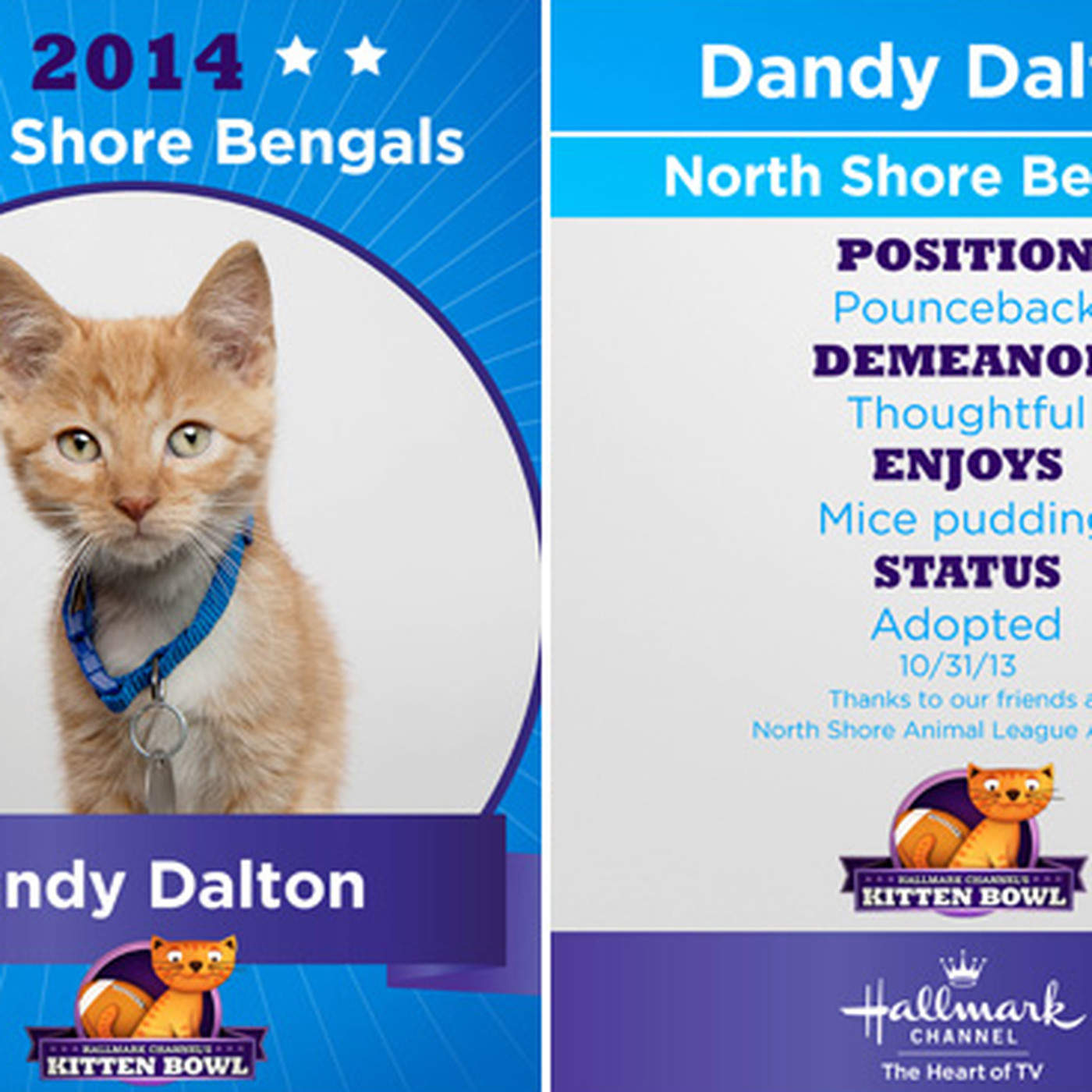 Kitten Bowl 2014 Lineup Streaming Tv Schedule And More Sbnation Com