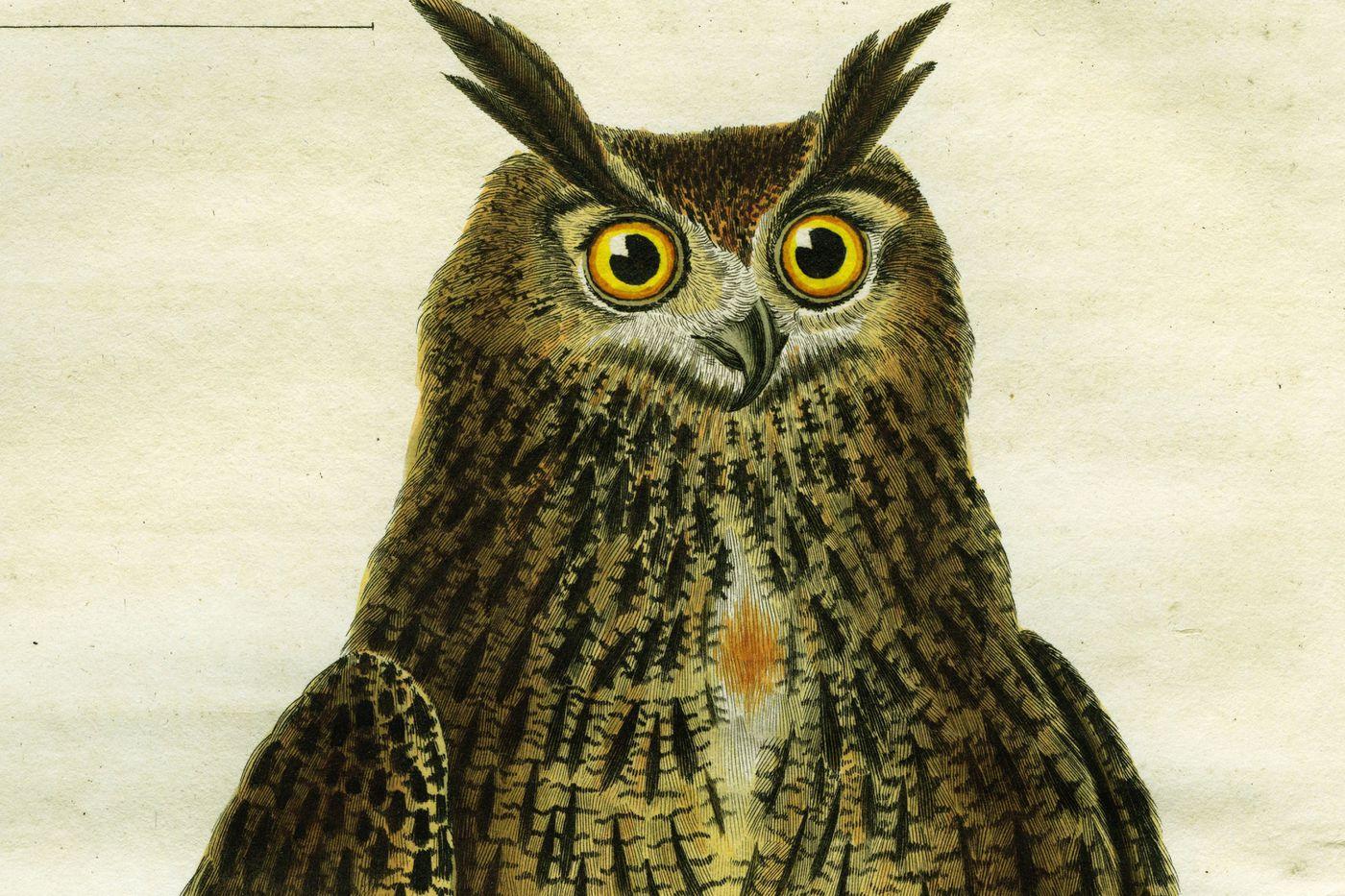 Một bản vẽ của một con cú từ những năm 1780, khoảng thời gian ngắn Illuminati hoạt động. Hình ảnh phổ quát Nhóm / Getty Images