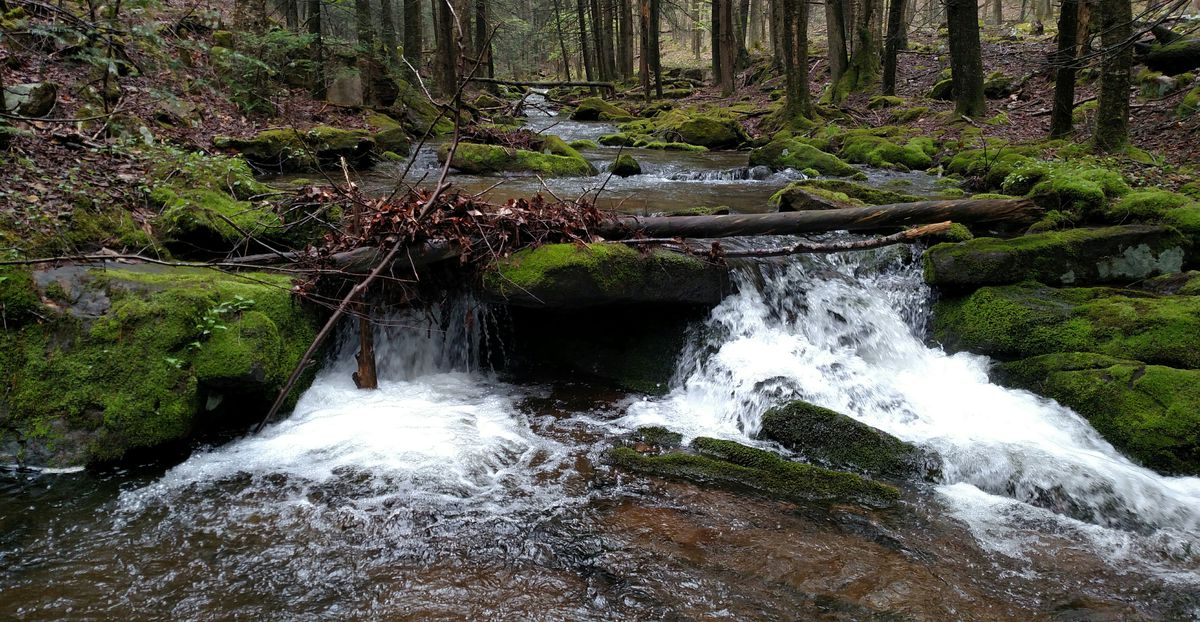 One place where Dale Bowman wants his ashes spread is at the headwaters/spring at this tiny trout stream in Pennsylvania, where the inspiration for his first outdoor magazine sale came. Credit: Dale Bowman