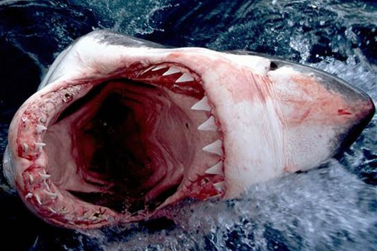 """via <a href=""""http://images.travelpod.com/tripwow/photos/ta-0116-0086-c455/this-is-a-angry-shark-from-greenland-n3-greenland-greenland+1152_13002977558-tpfil02aw-12422.jpg"""">images.travelpod.com</a>"""