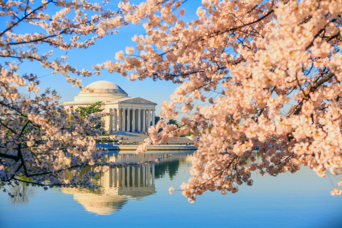 Philadelphia Cherry Blossom Festival 2020.Cherry Blossom Festival In D C Is Under A Month Away But