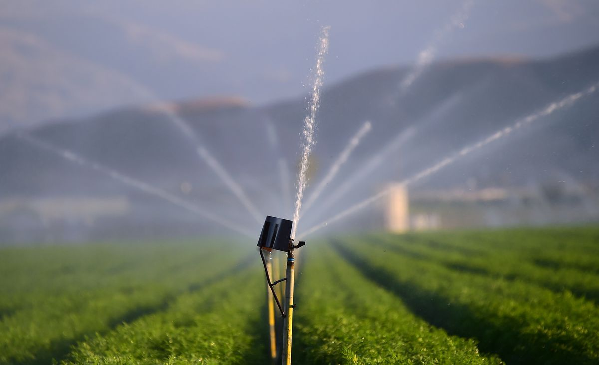 Fields of carrots are watered on March 29, 2015 in Kern County, California, which became the nation's number 2 crop county for the first time in 2013. (Frederic J. Brown/AFP/Getty Images)