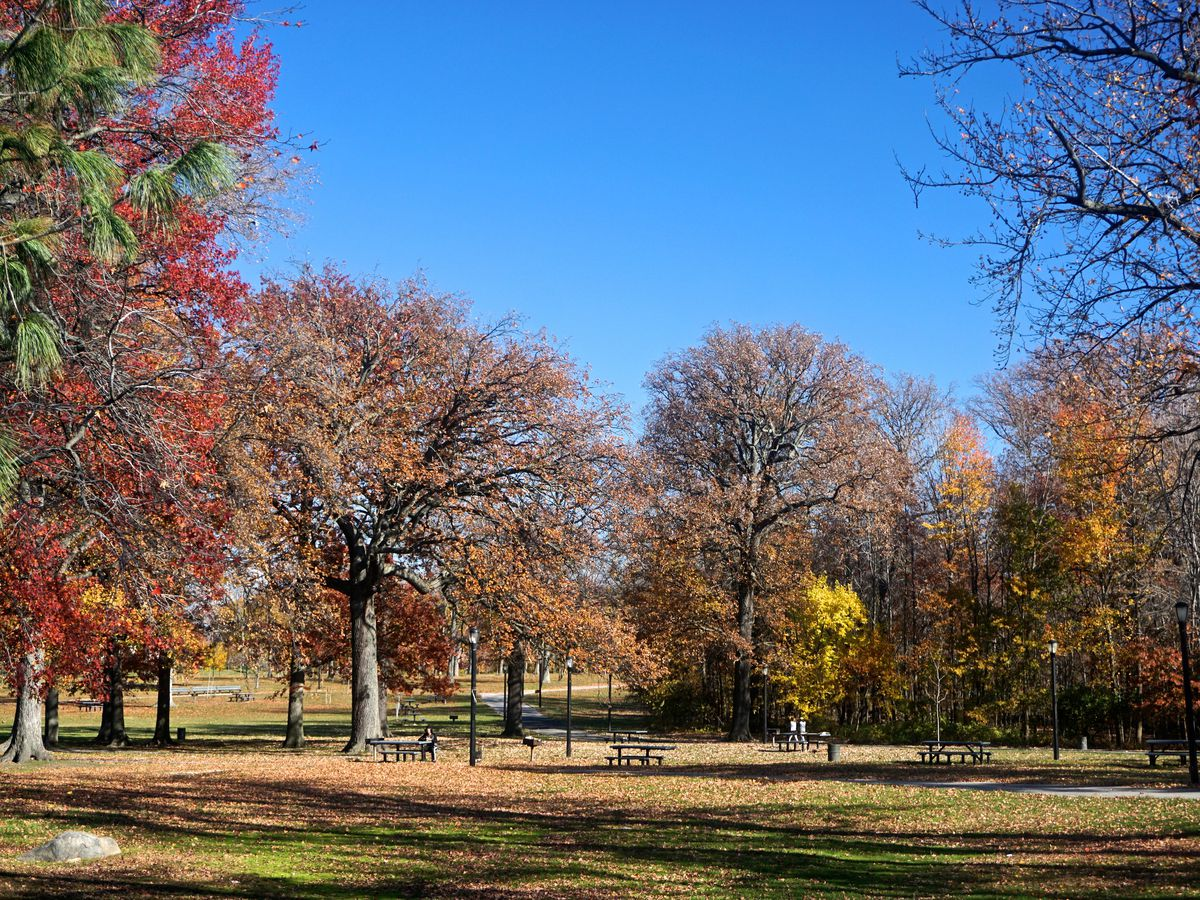 A group of trees with colorful autumn leaves in shades of yellow, orange, and red in Pelham Bay Park.
