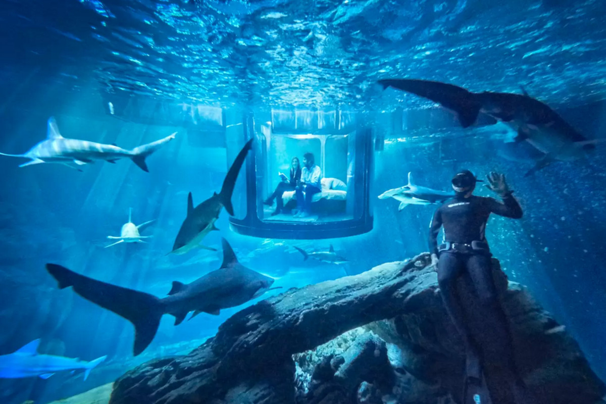 The Shark Aquarium on AirBnB. Airbnb will let two people sleep in an underwater bedroom